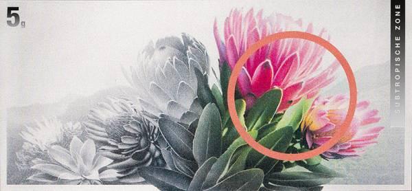 Silberbarren Die Klimazonen der Welt Protea Blume