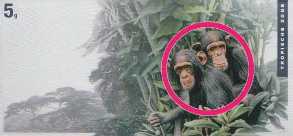 Silberbarren Die Klimazonen der Erde Affe