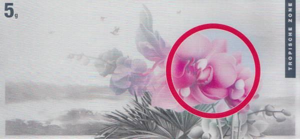 Silberbarren Die Klimazonen der Erde Orchidee