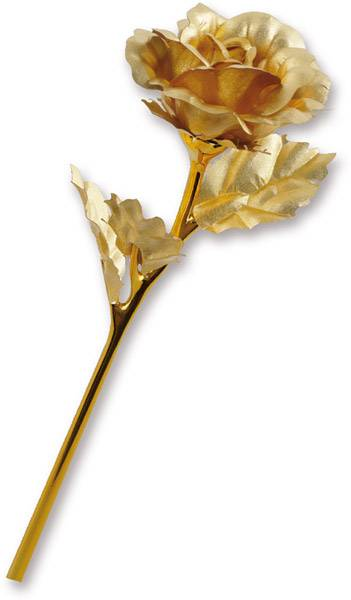 Goldene Rose mit offener Blüte